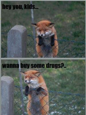 wanna buy drugs
