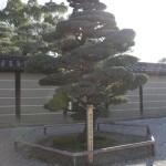 Drzewko :)