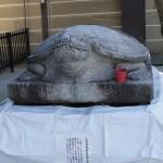 Żółw!