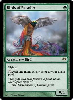 birds_of_paradise_promo